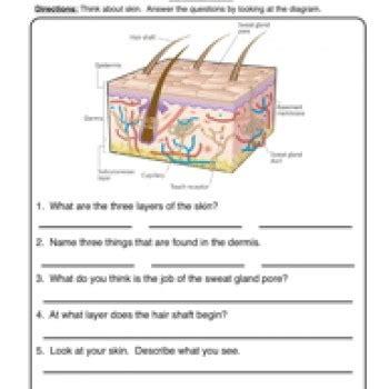 Alphabet Printable Worksheets Skin Worksheet 1