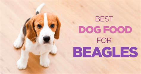 dog food  beagles high protein  carb diet