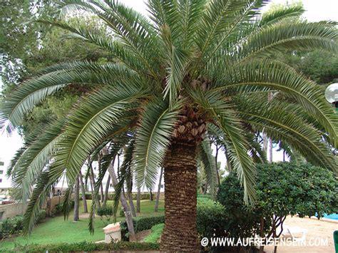 Mediterrane Winterharte Pflanzen. Mediterrane Pflanzen F R