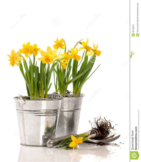 planting bulbs stock images image 28748424