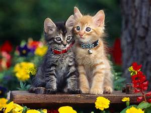 Cute Dogs Pets: Cute Cats and Kittens Pictures and Wallpapers
