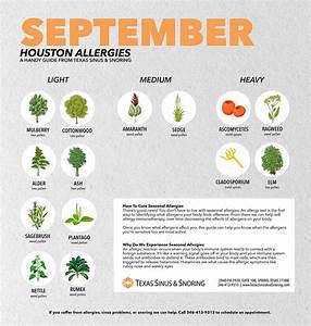 September Allergens In Houston