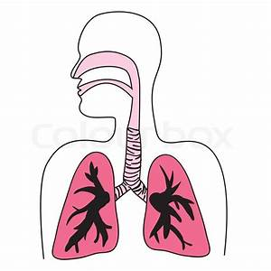 Drawing Of The Human Respiratory System In Vector Format