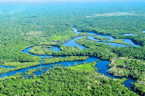 Save the Amazon Rainforest - Information and News About the Amazon ...