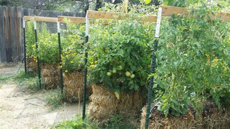hay bale gardening why hay bales are superior to straw bales which makes a