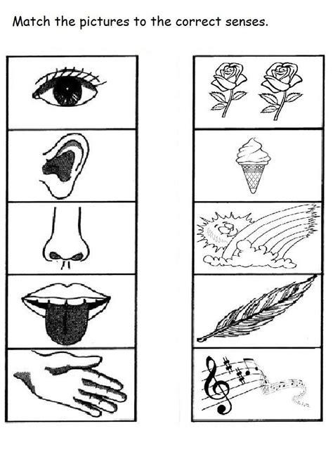 senses worksheet  kids  crafts  worksheets