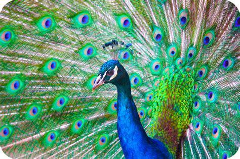big colorful bird details