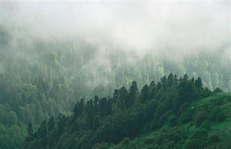 misty valley forest wallpaper murals wallpaper