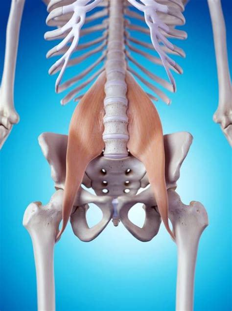 Topmost can psoas cause back pain review