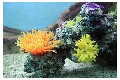 free download coral reef video