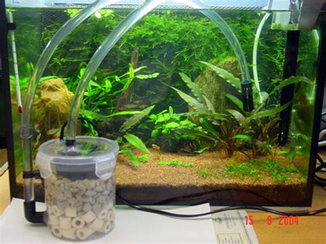 tremendous benefits  filtered water  aquariums doggy