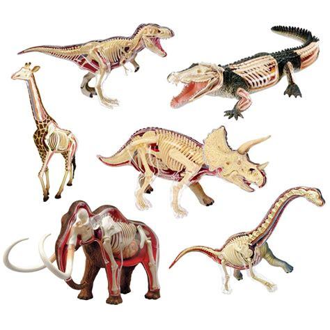 animal vision anatomy dinosaur giraffe wrist dragon tiger