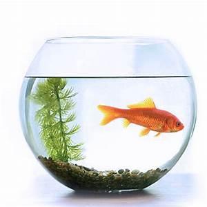Fish Bowl (Big Size) - UARTI