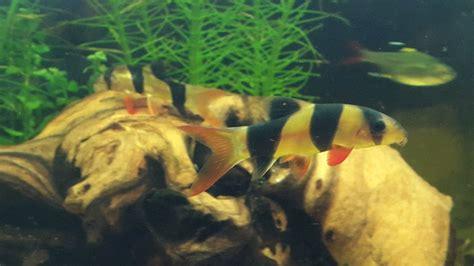 complete fish compatibility list  aquarium club