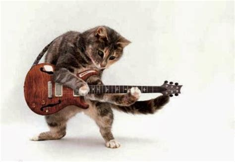 funny cats playing guitar  nice images