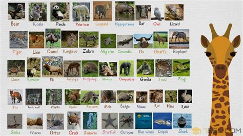 Wild Animals: List Of Wild Animal Names In English With