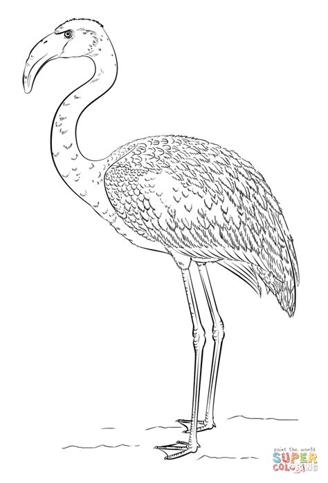 flamingo coloring page coloring home