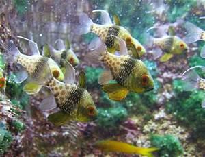 Tiere Für Aquarium : abgabeliste aquarium aquarium knowhow ~ Lizthompson.info Haus und Dekorationen