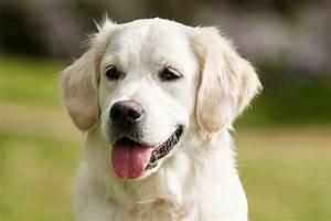 Haustiere Für Die Wohnung : ideale hunde f r anf nger ~ Frokenaadalensverden.com Haus und Dekorationen