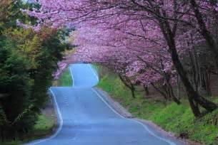 hanami de tokyo al jerte de flor en flor blogs el pais