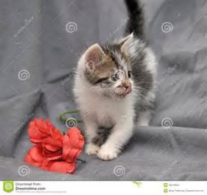 Gray and White Kitten