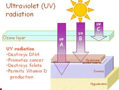 uv l vitamin d the sun can t live with it can t live without it