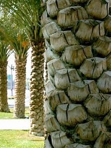 Free Palm Tree Trunk Stock Photo
