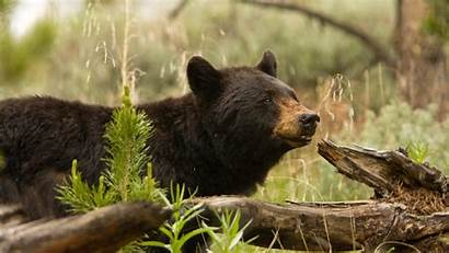 Florida Bears Species Endangered Act Animal Defense