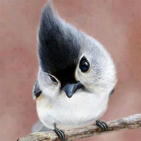 baby tufted titmouse beautiful creatures pinterest