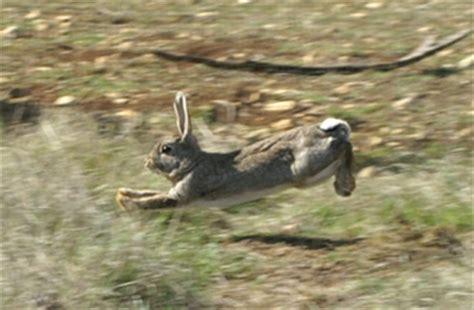 cuisiner le lapin de garenne gibier des causses élevage de lapins de garenne accueil