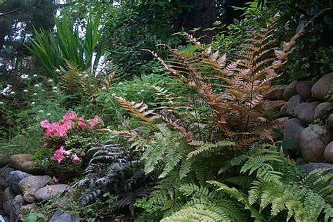 ferns for shade garden shade garden ferns and geranium ℱεяηຮ ℱя 248 η ຮ pinterest