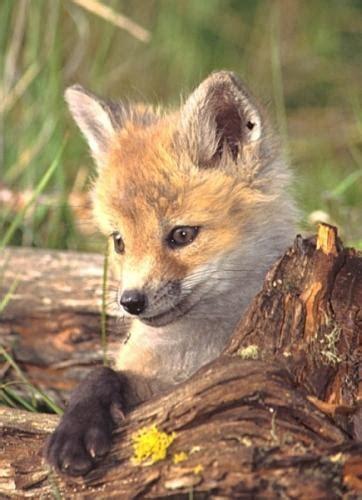 Mans mīļākais dzīvnieks - LAPSA - Spoki