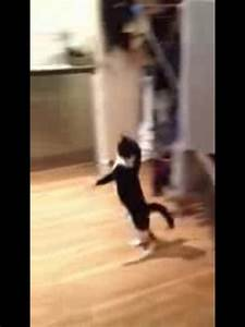 Mr Bouncy Cat - The Funny Cat Walk Hop - YouTube