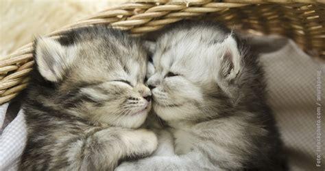 erstausstattung fuer katzenkinder katzen lieben feliway