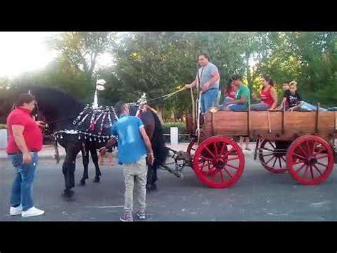 carrozze e cavalli sfilata cavalli carri e carrozze 2017 alezio