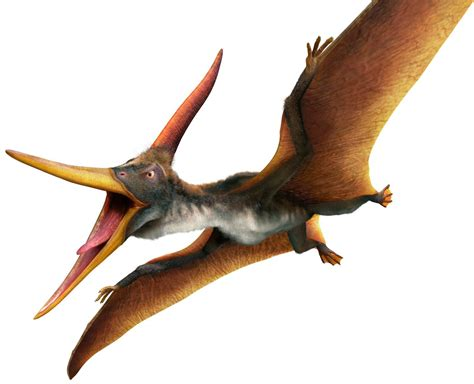 Pterodactyl Was Not Only The Flying Dinosaur, There Were