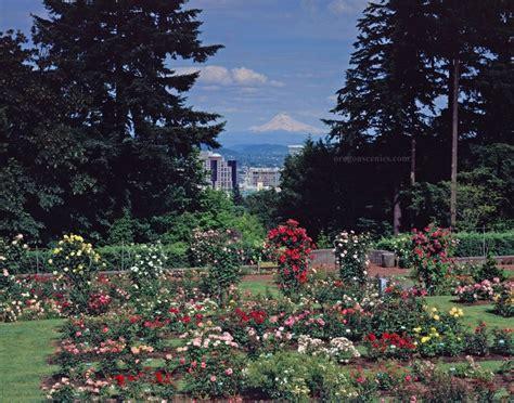 garden in portland oregon rose garden portland oregon oregon pinterest