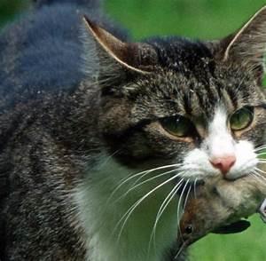 Heimische Singvögel Bilder : umwelt katzen gef hrden fortbestand heimischer singv gel ~ Whattoseeinmadrid.com Haus und Dekorationen