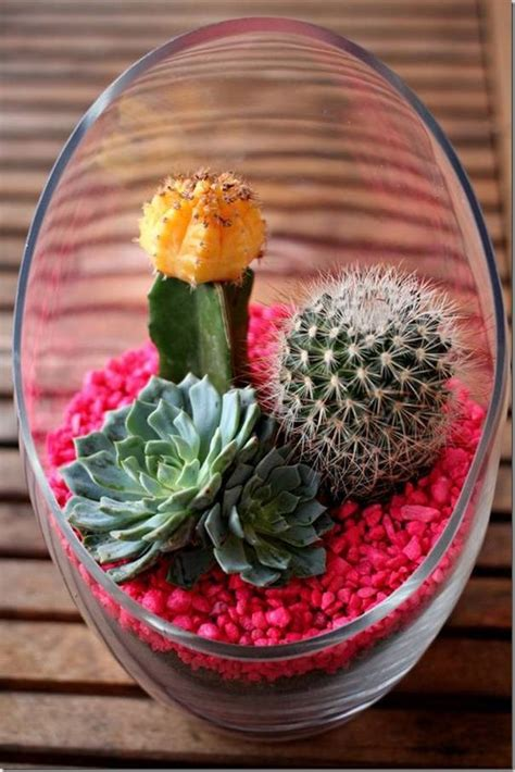 mini cactus gardens   leave  speechless
