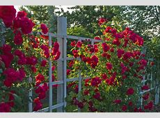 How to Design a Rose Garden