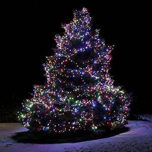 10, Things, To, Consider, Before, Installing, Christmas, Lights, On, Outdoor, Trees