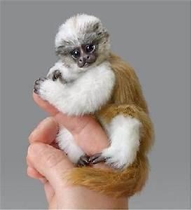 Monkey Baby Baby Dolls And Drake On Pinterest