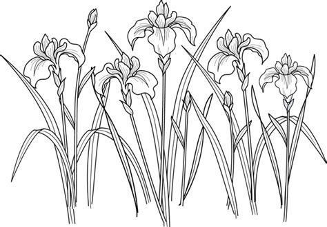 dessins cuisine coloriage des iris dory fr coloriages