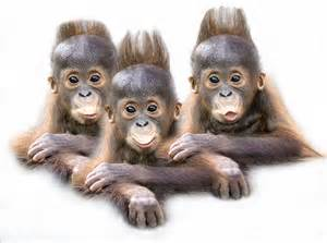 Funny Triplet Babies
