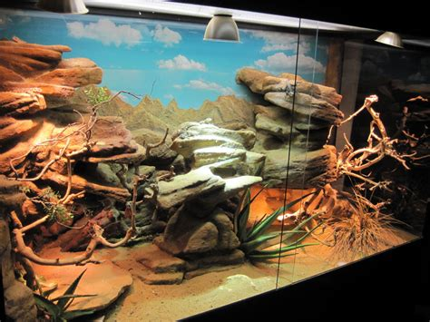 bearded terrarium decor make a rock cave basking spot for a reptile cage 10 steps with pictures