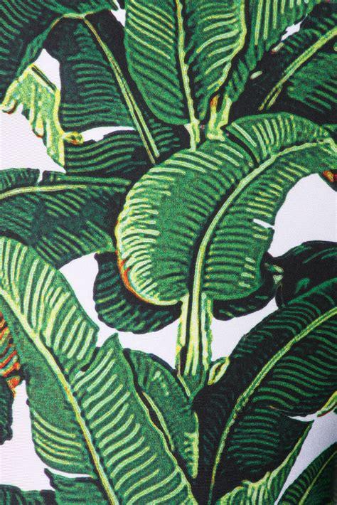 beverly hills banana leaf wallpaper gallery