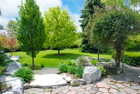 price of trees for landscaping trees for sale online fast home delivery and lowest prices