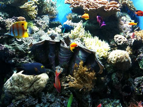 visit cannery row and the monterey bay aquarium