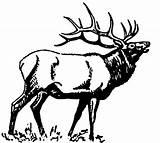 Elk Coloring Bugling 1237 1114 D6 Moose Books Carving sketch template
