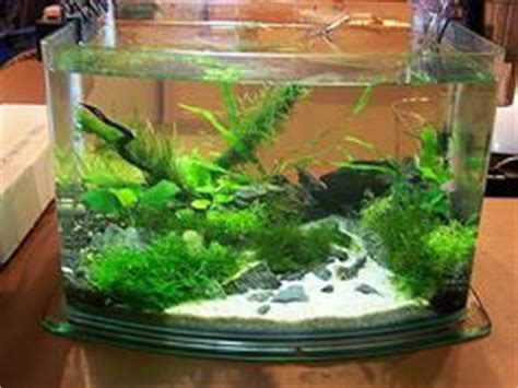 Aquascape Shrimp Tank by Planted Aquariums On Aquascaping Aquarium And